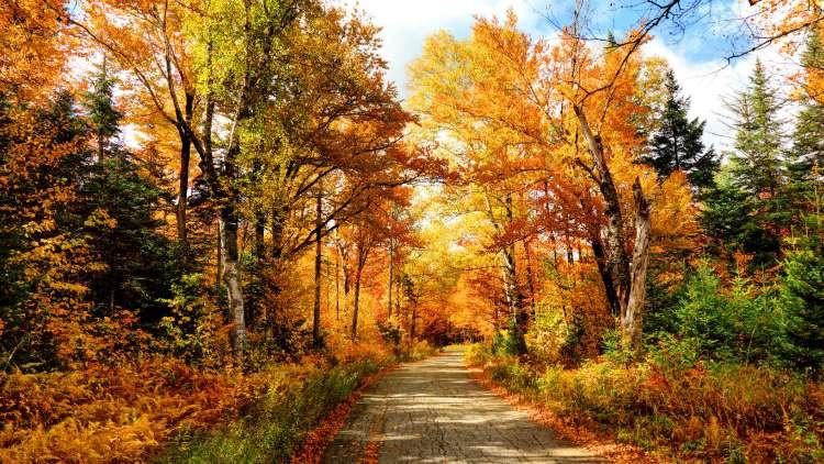 Fall Kansas City