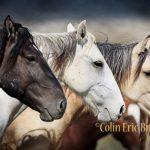 Colin E. Braley Photography